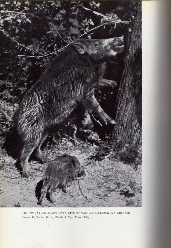 Méliusz Antikvárium - Homoki Nagy István: Gyöngyvirágtól lombhullásig-Színes  filmmel vadmadarak után